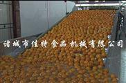 滄州大棗清洗機,全自動柑桔清洗設備