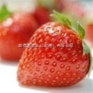 草莓汁、草莓酱加工设备生产线
