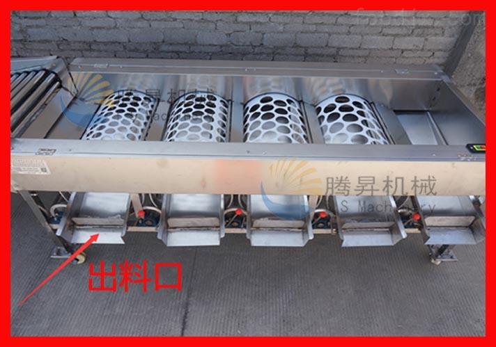 ts-f250 瓜果加工厂用 水果分级机 分选机 柑桔分级机