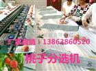 XGJ-SZZ江苏不伤果的映霜红晚桃分选机