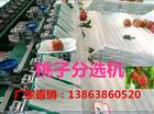 XGJ-SZZ映霜红晚桃分选机-厂家直销的映霜红晚桃选果设备